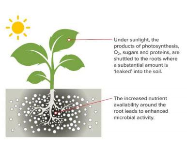 air grow plat description