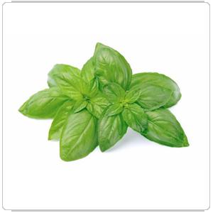 leaf 09