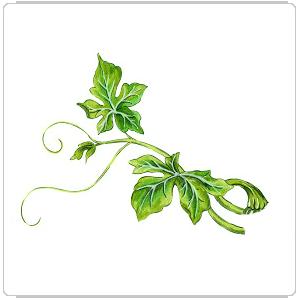 leaf 08