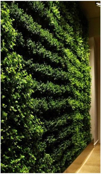 green wall 01