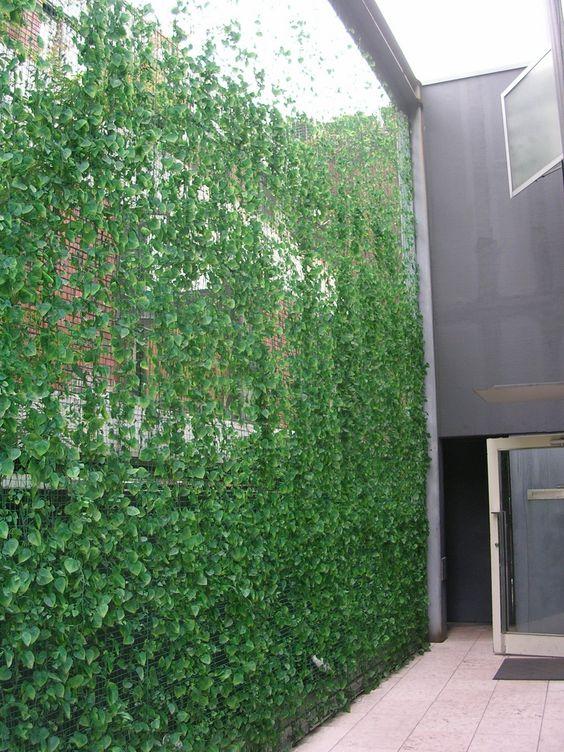 Vertical garden of steel mesh