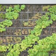 types of plants used in living green walls