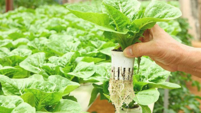 Edible Plants for your Vertical Garden